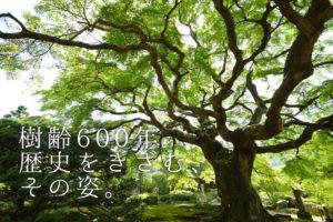正善寺アイキャッチ (2)