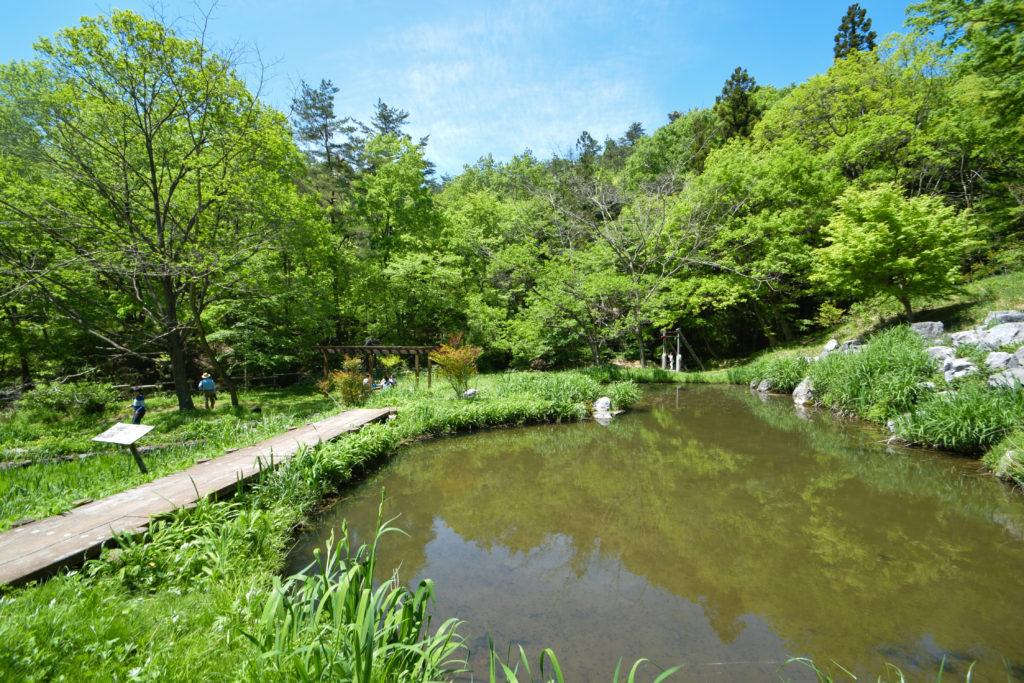 農村公園池
